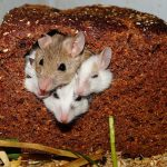 Different Types of Pest Control